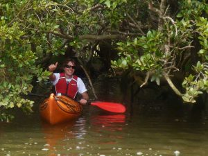 mangrove-kayaking-tours-nz
